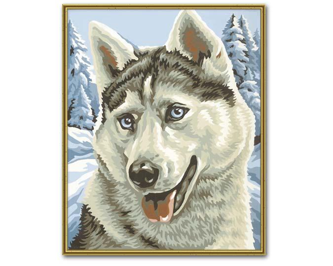 Husky siberiano para colorear - Imagui