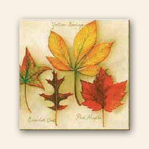Pin los bordes para decorar hojas que tenemos ti anny imagenes on pinterest - Hojas de otono para decorar ...